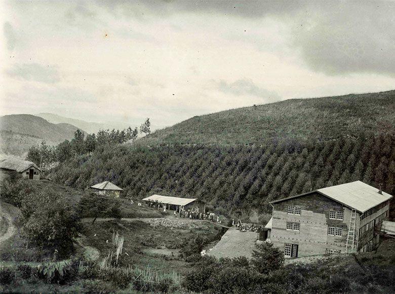 the-plantation
